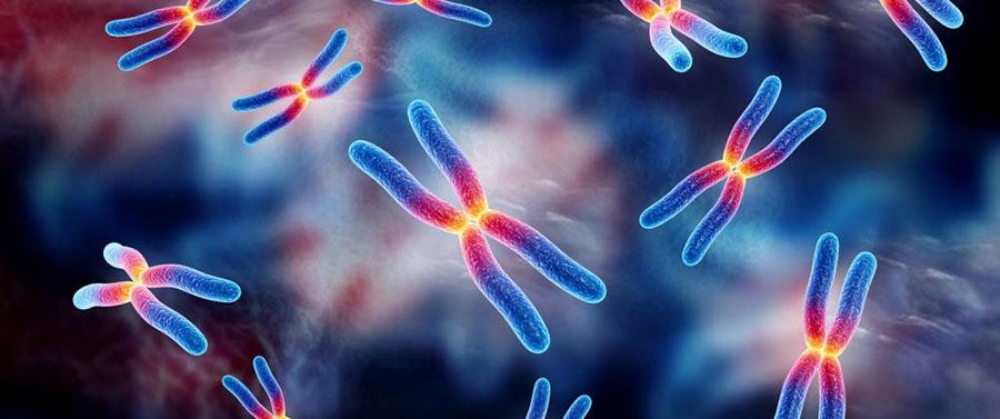 gentrix-estudios-geneticos-estudio-citogenetico-cariotipo