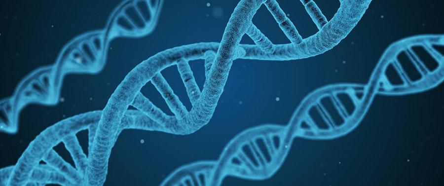 gentrix-estudios-geneticos-estudios-moleculares-a-traves-de-paneles-geneticos